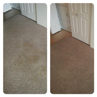 carpet-cleaning-bloomfield-before-after-3